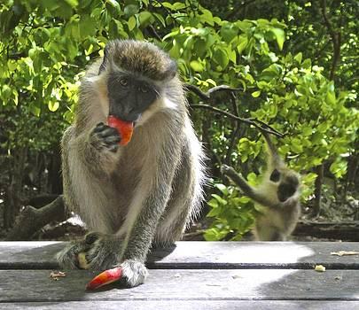 Jennifer Lamanca Kaufman - Green Monkey Eating an apple