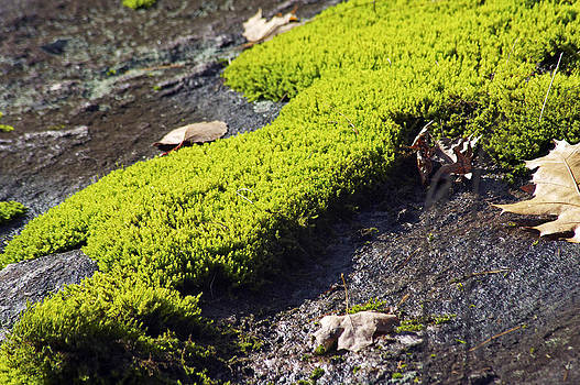 Elaine Mikkelstrup - Green Moss