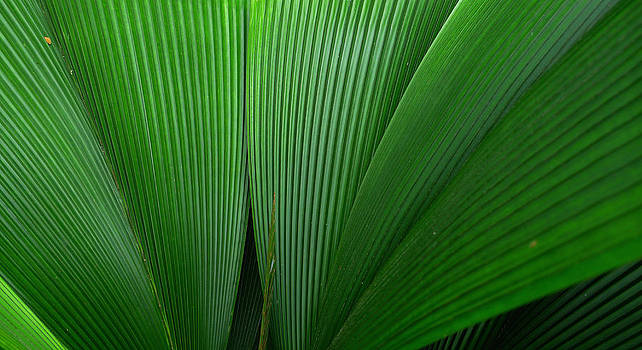 Green Palm Leaves by August Timmermans