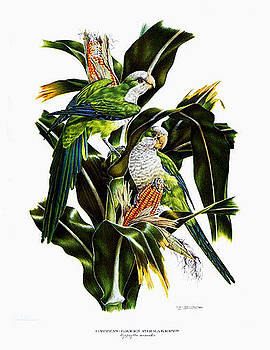 Green Parakeets by Axel Amuchastegui