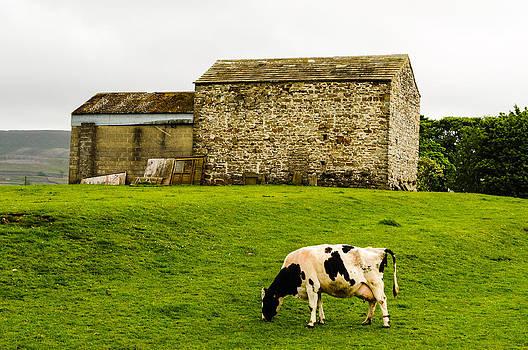 Eliza Donovan - Green Pastures
