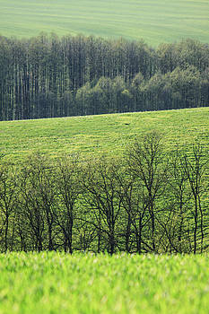 Green peace by Davorin Mance