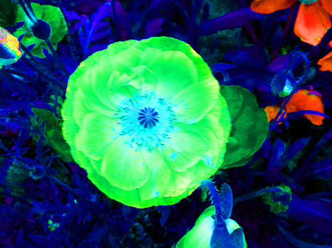 Green Poppy by Louise Grant