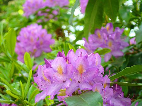 Baslee Troutman - Green Rhododendron Floral Garden Pink Purple art Prints