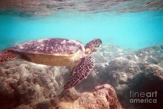Christine Stack - Green Sea Turtle
