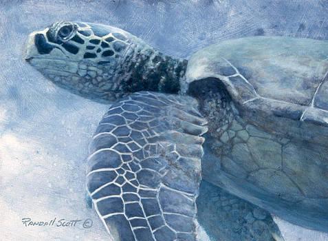 Green Sea Turtle by Randall Scott