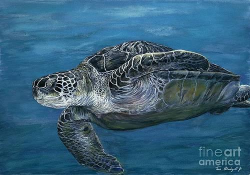 Green Sea Turtle by Tom Blodgett Jr