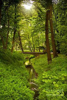 Green spring trees and bridge by Arletta Cwalina