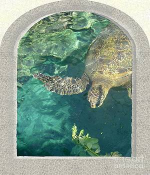 Green Turtle by Sylvie Heasman