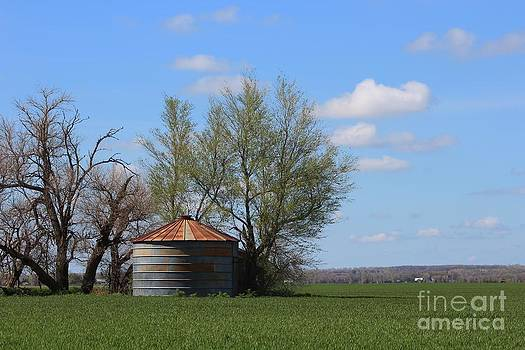 Green Wheatfield with an OLD Grain Bin by Robert D  Brozek