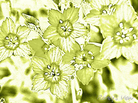 Green With Envy by Lorraine Heath