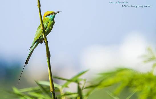 GreenBeeEater by Virag Yelegaonkar