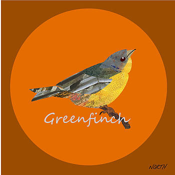 Greenfinch by Kenneth North