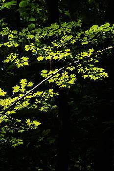 Greening 2 by Jim Cotton