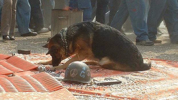 Marc Philippe Joly - Greenpeace dog