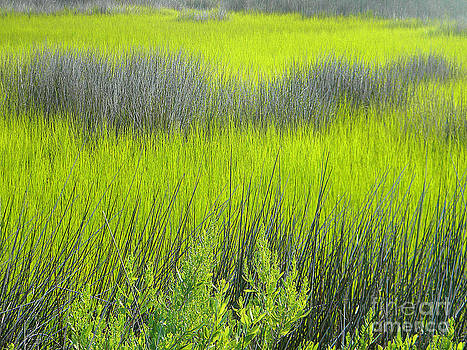 Greens and Browns of the Marsh by Lorraine Heath