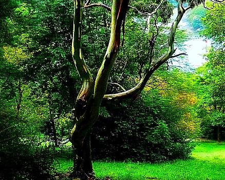 Greenway Tree by Michael Tipton