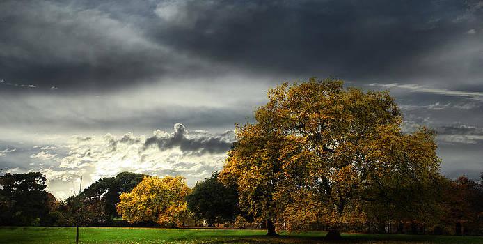Greenwich Park View by Martin Hristov