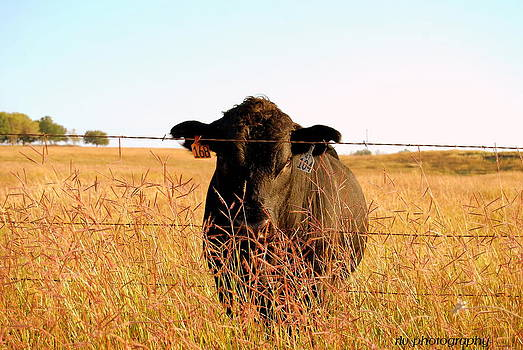 Greetings From Texas by Regina  Vasquez