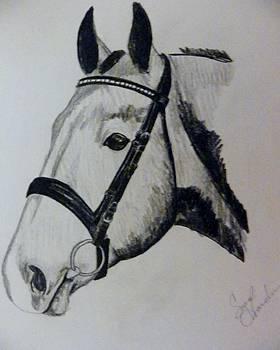 Grey Horse by Sarah Hardin