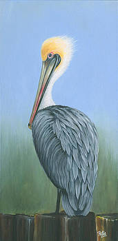 Grey Pelican by Anthony Fotia