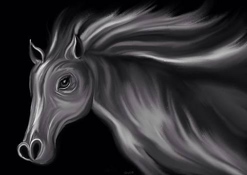Nick Gustafson - Grey Stallion