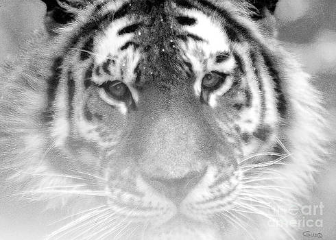 Nick Gustafson - Grey Tiger