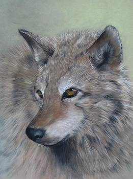 Grey Wolf by Anne Kerr
