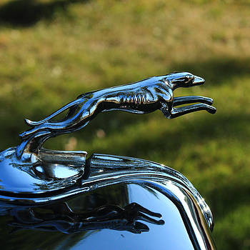 Greyhound Hood Ornament by Jim Cotton