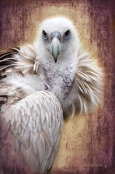Barbara Orenya - Griffon Vulture