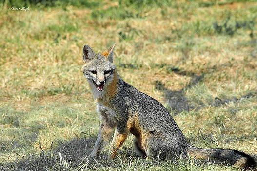 Karen Slagle - Grinning Fox
