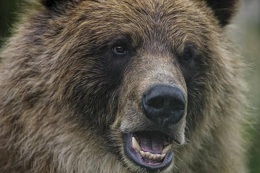 Paul W Sharpe Aka Wizard of Wonders - Grizzly Bear Close Up