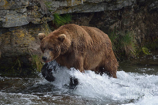 Patricia Twardzik - Grizzly Bear in Motion