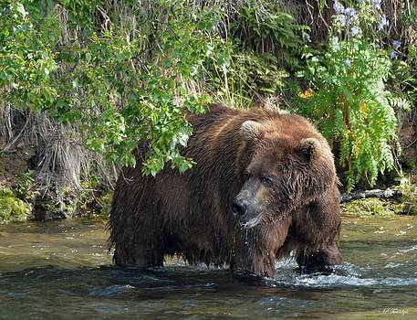 Patricia Twardzik - Grizzly Bear in the Greens