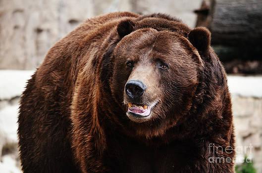 Rachel Barrett - Grizzly Bear
