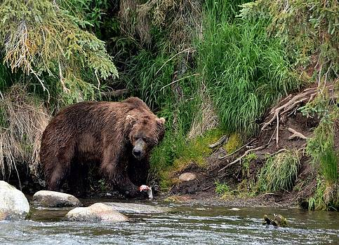 Patricia Twardzik - Grizzly Bear Salmon Fishing