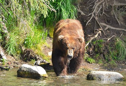 Patricia Twardzik - Grizzly on the Prowl