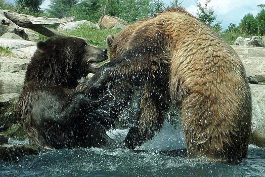 Grizzly Wrestling by Loretta Orr