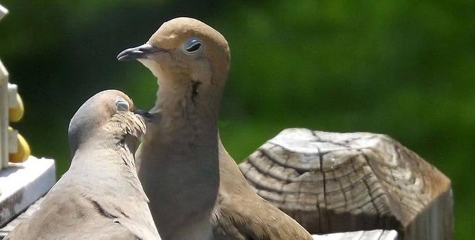 Grooming Doves by Michael Sokalski