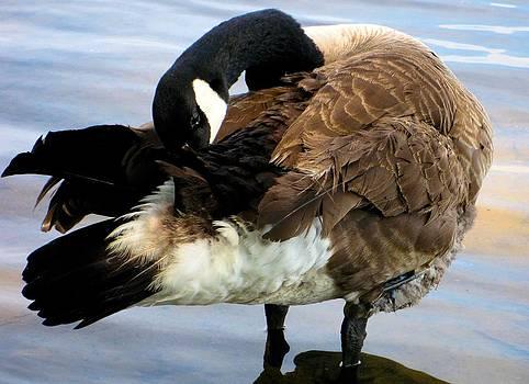 Grooming Duck by Claudette Bujold-Poirier