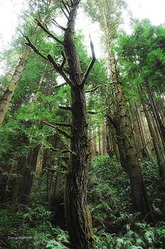 Donna Blackhall - Groovin With The Redwoods