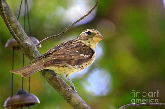 Songbird by Jaunine Roberts