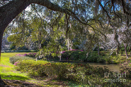 Dale Powell - Grounds of Middleton Place Plantation