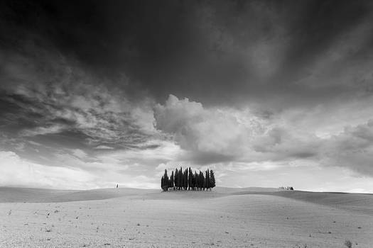 Group of cypresses in Tuscany by Toma Bonciu