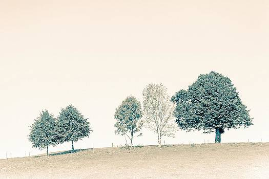 Group of Trees by Bjoern Kindler