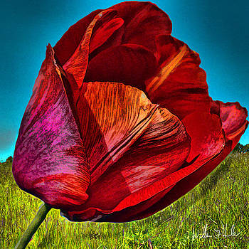 William Havle - Growing Red Tulip