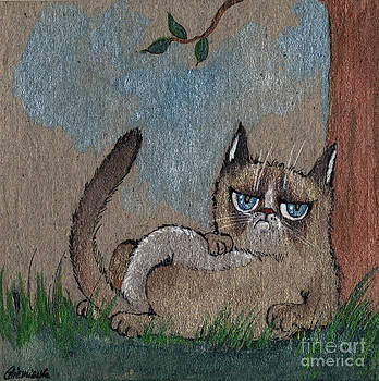 Angel  Tarantella - grumpy cat having some rest