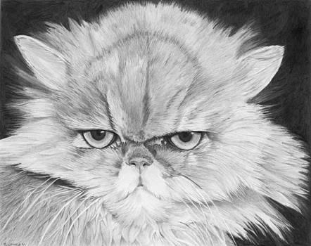 Grumpy Cat by Sandra Weiner