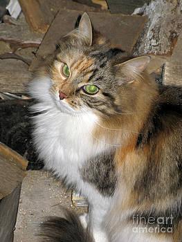 Grumpy Kitty With Emerald Eyes by Ausra Huntington nee Paulauskaite