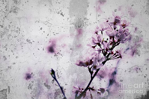Beverly Claire Kaiya - Grunge Cherry Blossoms Over Grey Concrete Wall
